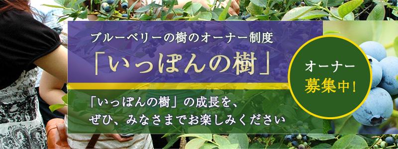 ブルーベリーの樹のオーナー制度「いっぽんの樹」オーナー募集中!